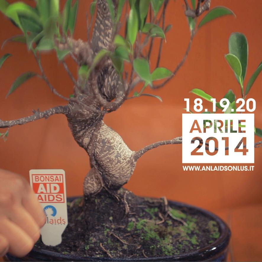 bonsai-aid-aids-2014